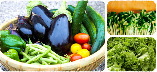 減農薬、減化学肥料栽培の野菜セット