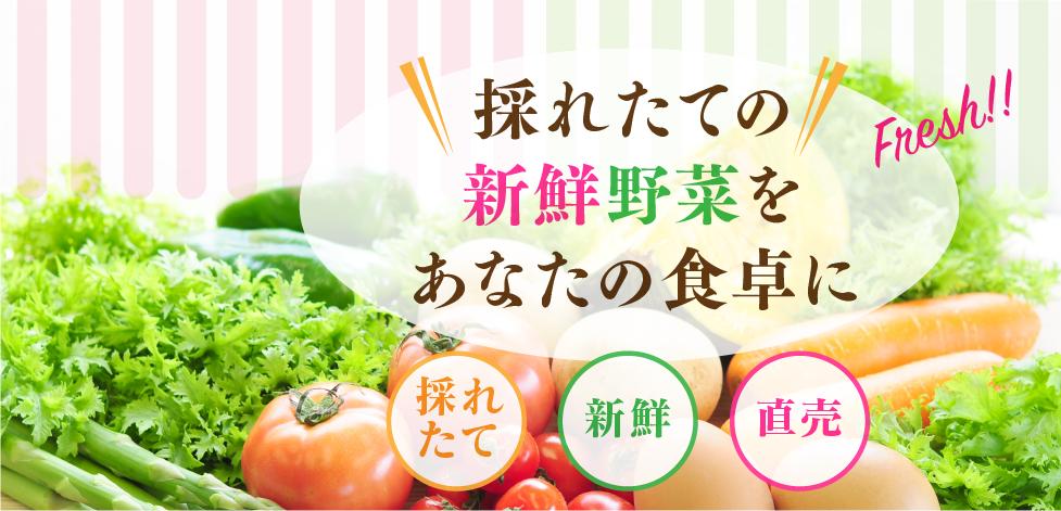 ベジハートの野菜詰め合わせセット