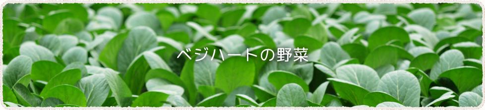 葉物野菜の苗