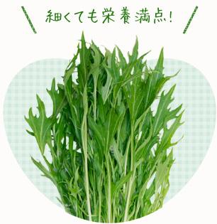 減農薬の水菜