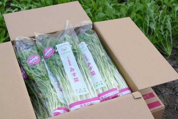 ベジハ―トの水菜